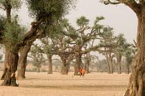 Women walking between trees in a wadi (dry river bed), Darfur region, Sudan, May 2006. - Boris Heger - 11-05-2006
