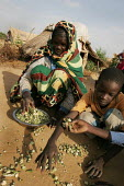 A boy refugee from Darfur helps his grandmother to gather some dry vegetables in the Gaga refugee camp, Eastern Chad, near the border with the Darfur region of Sudan. October 2005. - Boris Heger - 30-09-2005