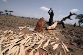 A villager cuts firewood for cooking. This creates a very serious environmental problem the few existing trees are disappearing rapidly and the land is getting even more dry., Tadecha Gurach, Ethiopia... - Boris Heger - 07-06-2006