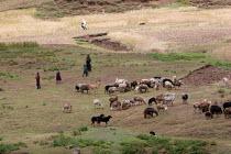 Children heard their goats in a village, South Wollo region, Ethiopia, August 2005. - Boris Heger - 08-09-2006