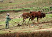 A man ploughing his field, village in South Wollo region, Ethiopia, August 2005. - Boris Heger - 08-09-2006