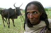 A woman and her only cow, near Dessie, South Wollo region, Ethiopia, August 2005. - Boris Heger - 08-09-2006