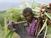 Man coming back from the fields, near Dessie, South Wollo region, Ethiopia, August 2005. - Boris Heger - 08-09-2006