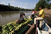 Transport of plantains bananas with pirogues on the Rio Tuira, El Real, Darien region, Panama, January 2006. This region is very remote. - Boris Heger - 30-08-2006