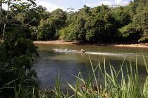 Pirogues on the Rio Tuira, near Boca de Cupe, Darien region, Panama, January 2006. This region is very remote. - Boris Heger - 30-08-2006