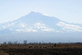 A shepherd and his animals walk at the foot of Mount Ararat, located just after the border with Turkey, near Khor Virap, Armenia, February 2005. According to the Bible account in the book of Genesis,... - Boris Heger - 05-03-2005