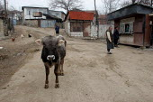 Street scene with a cow and an old woman, Azokh, Nagorno Karabakh, Azerbaidjan, March 2005. The region, although officially located within Azerbaidjan, is being occupied by Armenia and has became a de... - Boris Heger - 04-03-2005