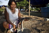 An internally displaced indigenous woman cooking a young crocodile outside her shelter. San Jose del Guaviare, Colombia. - Boris Heger - 2010s,2011,alligator,americas,Amerindian,Amerindians,animal,animals,Barrio,Barrios,Colombia,Colombian,Colombians,columbian,columbians,communities,community,cook,COOKERY,cooking,cooks,crocodile,crocodi