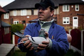 A Pigeon Fancier shows an injured bird in his brothers back garden. He is a police officer and is part of the local pigeon racing group district five in Sheffield. Pigeon racing is a traditional Yorks... - Connor Matheson - 13-04-2012