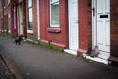 Cats in a housing estate Maltby, Rotherham. - Connor Matheson - 07-04-2014