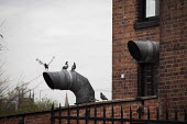 Birds flying off air conditioning pipes. Sheffield Centre, South Yorkshire. - Connor Matheson - 16-04-2015