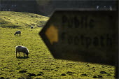 Sheep farming in Cumbria. - Christopher Thomond - 31-03-2009