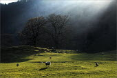 Sheep farming in Cumbria. - Christopher Thomond - 2000s,2009,agricultural,agriculture,animal,animals,capitalism,capitalist,country,countryside,domesticated ungulate,domesticated ungulates,EBF,Economic,Economy,eni environmental issues,farm,farmed,farm