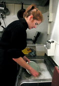 Waitress washing the dishes in the kitchen of a South Yorkshire cafe - David Bocking - 2000s,2001,and,cafÈ,cafe,cafes,caterer,catering,cleaning,cleansing,dishes,EARNINGS,EBF economy,EQUALITY,FEMALE,food,FOODS,Hospitality,Income,INCOMES,inequality,job,jobs,kitchen,KITCHENS,LAB LBR work,