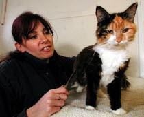 RSPCA animal handler grooming a cat - David Bocking - 14-01-2002