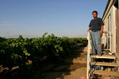 Farm workers house trailer in the middle of a grape field, California USA. The vines come right up to the front door exposing his family to pesticides and fertilizer used on the grapes. Velasco and hi... - David Bacon - 09-06-2006