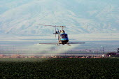 A helicopter sprays pesticides over a field of bell peppers outside of Arvin. - David Bacon - 10-06-2006