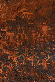 Petroglyphs, or drawings inscribed on the rockface of the Colorado River Canyon between Potash and Moab. They were made by the Anasazi, or ancestors of the current pueblo peoples -- Hopi, Zuni, Laguna... - David Bacon - 03-08-2005