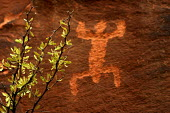 Petroglyphs, or rock drawings inscribed on the rockface of the Colorado River Canyon between Potash and Moab. They were made by the Anasazi, or ancestors of the current pueblo peoples -- Hopi, Zuni, L... - David Bacon - 03-08-2005