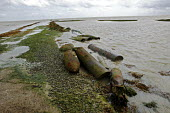 Rusted torpedoes and bombs, MOD weapons testing site, Foulness Island, Shoeburyness, Essex - David Mansell - 01-07-2007