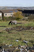 A horse grazing on wasteland on the Twyncarmel Estate in Merthyr Tydfil. - David Mansell - 2010,2010s,animal,Animal Welfare,animals,council estate,council services,council estate,council services,domesticated ungulate,domesticated ungulates,equestrian,equine,hill,hills,horse,horses,house,ho