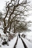 A waliker in the Snow, Bala, Gwynedd, Wales - David Mansell - ,2010s,2013,access,activities,Broadleaf Tree,CLIMATE,cold,conditions,country,countryside,eni,environment,Environmental Issues,exercise,exercises,exercising,footpath,footpaths,freezing,frozen,hiker,hik