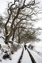 A waliker in the Snow, Bala, Gwynedd, Wales - David Mansell - 29-04-2013