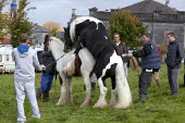 Country Fair Day, The Ballinasloe Horse Fair, County Galway, Ireland. The owner of the piebald stallion charges the owner of the mare for mounting with his stallion. Mares come into season during thei... - David Mansell - 2010s,2012,ACE,animal,animals,Ballinasloe,BAME,BAMEs,BME,bmes,breeder,breeders,breeding,buy,buyer,buyers,buying,commodities,commodity,culture,cycle,cycles,dealer,dealers,dealing,diversity,domesticated