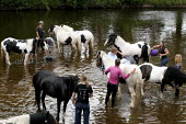 Appleby Horse Fair, Cumbria, washing horses in the River Eden - David Mansell - 2010s,2015,animal,animals,BAME,BAMEs,BME,bmes,diversity,domesticated ungulate,domesticated ungulates,enjoy,enjoying,enjoyment,equestrian,equine,ethnic,ethnicity,Fair,gipsey,Gipsey Gipsy Gypsey,Gipsies