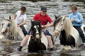 Appleby Horse Fair, Cumbria, washing horses in the River Eden - David Mansell - ,2010s,2015,animal,animals,BAME,BAMEs,BME,bmes,boy,boys,child,CHILDHOOD,children,diversity,domesticated ungulate,domesticated ungulates,enjoy,enjoying,enjoyment,equestrian,equine,ethnic,ethnicity,Fair