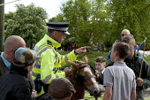 Appleby Horse Fair, Cumbria, police stopping boys riding a pony on the footpath. Police concerned with the safety of pedestrians walking along an overcrowded footpath along the banks of the Eden River... - David Mansell - , CLJ,2010s,2015,adult,adults,animal,animals,Appleby,BAME,BAMEs,BME,bmes,BOY,boys,child,CHILDHOOD,children,CLJ,communicating,communication,conversation,conversations,CROWDED,dialogue,discourse,discuss