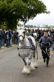 Appleby Horse Fair, Cumbria, dealers showing horses along Flashing Lane by trotting them at high speed to attract buyers - David Mansell - ,2010s,2015,animal,animals,BAME,BAMEs,BME,bmes,dealer,dealers,dealing,diversity,domesticated ungulate,domesticated ungulates,EBF,Economic,Economy,equestrian,equine,ethnic,ethnicity,Fair,Flashing,gipse