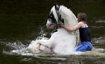 Appleby Horse Fair, Cumbria, washing horses in the River Eden - David Mansell - 07-06-2015