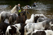 Appleby Horse Fair, Cumbria, RSPCA inspector watching horse washing in the River Eden - David Mansell - 2010s,2015,animal,animals,BAME,BAMEs,BME,bmes,diversity,domesticated ungulate,domesticated ungulates,equestrian,equine,ethnic,ethnicity,Fair,gipsey,Gipsey Gipsy Gypsey,Gipsies,Gipsy,gypse,gypsey,Gypsi