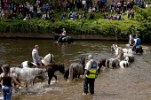 Appleby Horse Fair, Cumbria, RSPCA inspector watching horse washing in the River Eden - David Mansell - ,2010s,2015,animal,animals,BAME,BAMEs,BME,bmes,check,checking,country,countryside,diversity,domesticated ungulate,domesticated ungulates,equestrian,equine,ethnic,ethnicity,Fair,gipsey,Gipsey Gipsy Gyp