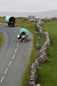 Appleby Horse Fair, Cumbria, horse drawn caravan returning home from the Fair using the spectacular scenic open moorland route from Kirkby Stephen to Sedbergh. - David Mansell - ,2010s,2015,animal,animals,caravan,caravans,country,countryside,domesticated ungulate,domesticated ungulates,driver,drivers,driving,equestrian,equine,Fair,gipsey,Gipsey Gipsy Gypsey,Gipsies,Gipsy,gyps