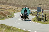 Appleby Horse Fair, Cumbria, horse drawn caravans returning along the Hartside Pass climbing the 2000 ft high Summit - David Mansell - 2010s,2015,animal,animals,caravan,caravans,climbing,country,countryside,domesticated ungulate,domesticated ungulates,driver,drivers,driving,equestrian,equine,Fair,gipsey,Gipsey Gipsy Gypsey,gypse,gyps