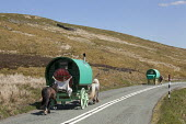 Appleby Horse Fair, Cumbria, horse drawn caravans returning along the Hartside Pass - David Mansell - 2010s,2015,animal,animals,caravan,caravans,country,countryside,domesticated ungulate,domesticated ungulates,driver,drivers,driving,equestrian,equine,Fair,gipsey,Gipsey Gipsy Gypsey,gypse,gypsey,Gypsie