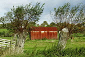 A agricultural barn and pollarded willow trees, at the Somerset Levels. - David Mansell - 29-10-2007