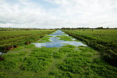 Artificial man-made river draining water from the surrounding fields, Somerset Levels, near Wedmore, Somerset - David Mansell - 29-10-2007