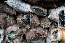 Coal for drying coffee, the principal crop of Toribio. Colombia - David Bacon - 26-10-2006
