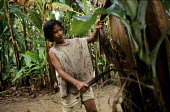 Child cutting fronds from the trunks of banana trees, Soyapa Farms banana plantation, San Jose Campostela, Mindanao, Philippines. The families on the plantation are paid so little that children have t... - David Bacon - 05-01-2007