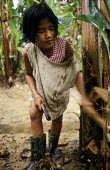 A child cuts fronds from the trunks of banana trees in the Soyapa Farms banana plantation in San Jose Campostela, Mindanao, in the Philippines. The families on the plantation are paid so little that c... - David Bacon - 05-01-2007