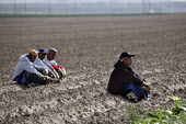 Mexican migrants cutting lettuce in a field, Greenfield, California. After cutting the head of lettuce with a knife, they place it on the coveyor belt of the lettuce machine - David Bacon - 2000s,2009,agricultural,agriculture,America,American,americans,BAME,BAMEs,BME,bmes,break time,by hand,capitalism,capitalist,crop,crops,cutters,cutting,Diaspora,diversity,EARNINGS,EBF,Economic,Economy,