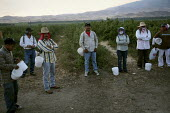 California. Migrant Mixtec farmworkers from Oaxaca pick blueberries. Workers at sunrise wait to go into the fields. - David Bacon - 12-06-2009