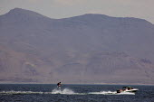 A water skier on Pyramid Lake, a huge lake in the Mojave Desert, on the Pyramid Lake Indian Reservation. The lake is the terminus of the Truckee River. It is a unique, fragile ecological area. - David Bacon - 04-07-2009