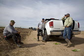 A crew of farm workers harvests bok choy for Vessey Farms in the Imperial Valley, just north of the border between the U.S. and Mexico. Workers rest by their pickup truck during their lunch break. Cal... - David Bacon - 03-12-2010