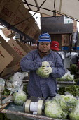 A worker spins the head of lettuce in its plastic bag in order to seal it. Farmworkers cut and pack head lettuce on a rig for Ocean Mist Farm in Winterhaven, just north of the border between Arizona a... - David Bacon - 04-12-2010