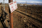 A sign warns Danger pesticide Dn Not Enter by a field of grapevines that has been sprayed with chemical pesticides that could be hazardous to control pests, Salinas Valley, California - David Bacon - 26-01-2012