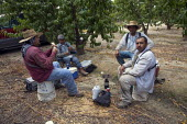 A crew of farm workers heating tortillas on a portable stove and eating lunch under the trees at the Wawona Packing Company in an orchard near Caruthers, a small town in the San Joaquin Valley. The wo... - David Bacon - American,2010s,2012,agricultural,agriculture,America,American,americans,BAME,BAMEs,Black,BME,bmes,BREAK,break time,California,capitalism,capitalist,casual workers,Company,crew,crop,crops,Diaspora,DINN